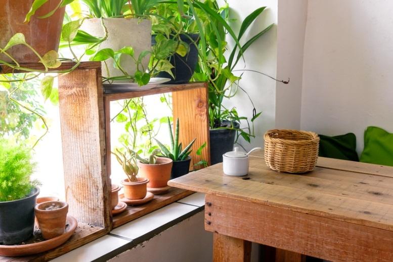 3 Fun Ways Interior Design Training Grads Use Plants & Trees in Room Design